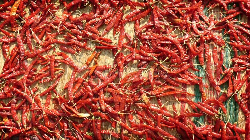 Den glühenden Paprikapfeffer auf der Matte trocknend - würzen Sie Markt in Indien lizenzfreie stockfotografie