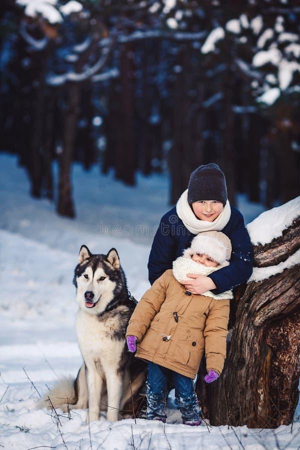Den gladlynta pysen och flickan står med deras stora hund i vintern nära ett krokigt träd i skogen arkivbild