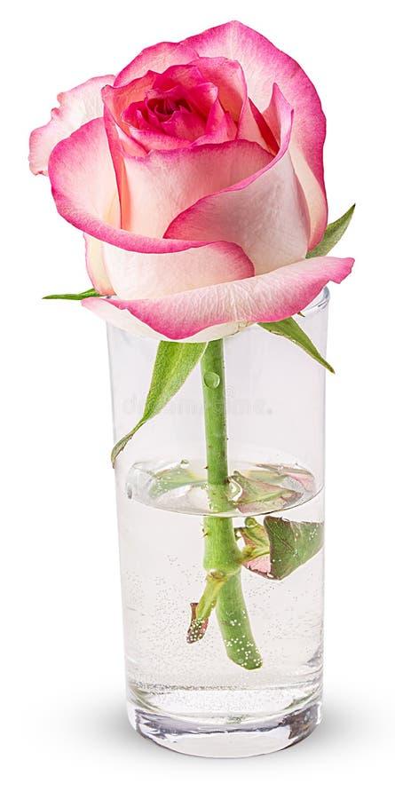 den glass pinken steg arkivfoton