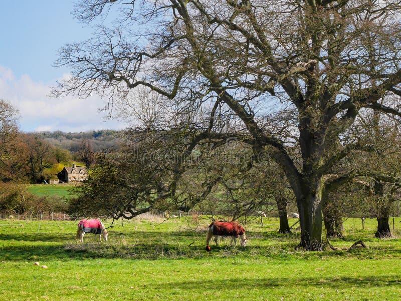 Den godsjordningsSudeley slotten nära Winchcombe Cotswolds royaltyfri foto