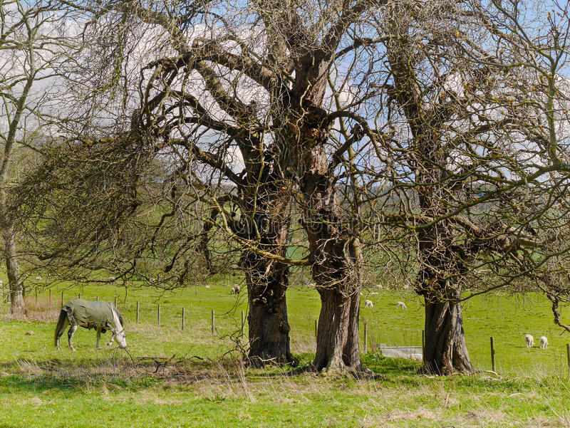 Den godsjordningsSudeley slotten nära Winchcombe Cotswolds royaltyfria foton