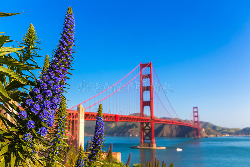 Den Golden gate bridge San Francisco lilan blommar Kalifornien arkivfoto