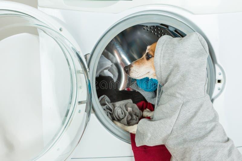 Den gråa gråa closeupen för baksida för hoodietröjahunden satte kläder till tvagningmaskinen fotografering för bildbyråer