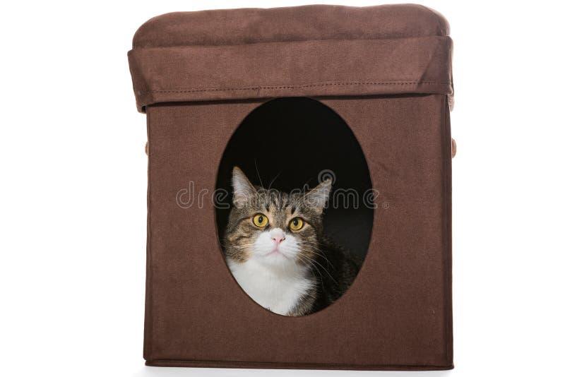 Den gråa katten ligger i det personliga huset arkivbilder