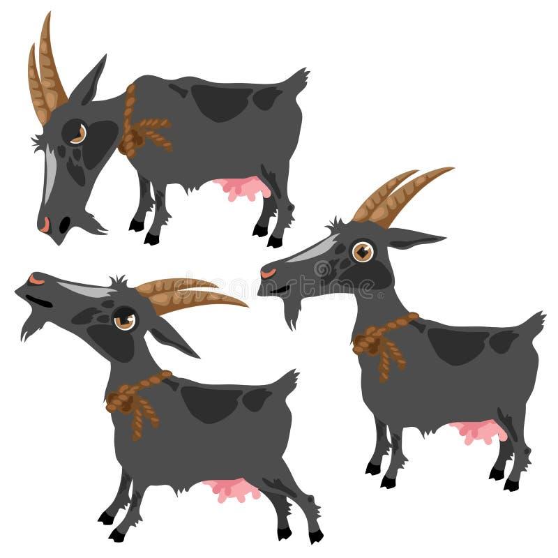 Den gråa prickiga geten i tre poserar, vektordjuret vektor illustrationer