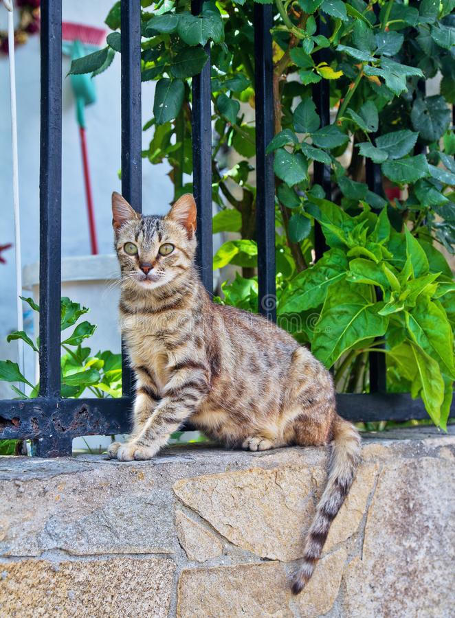 Den gråa unga katten sitter på väggen och att se in i avståndet i den gröna lövverket för bakgrund arkivbilder