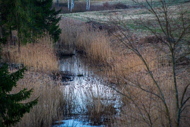 den gröna ängen betar gräsdetaljer vid floden royaltyfria foton