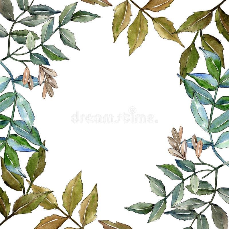 Den gröna askaen lämnar Blom- lövverk för bladväxtbotanisk trädgård Fyrkant för ramgränsprydnad vektor illustrationer