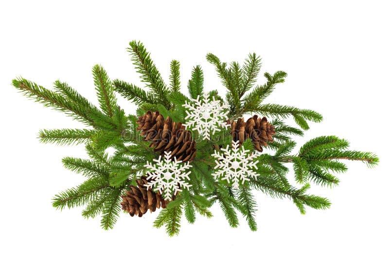 Den gröna filialen av julgranen med sörjer kottar som isoleras på vit royaltyfria bilder