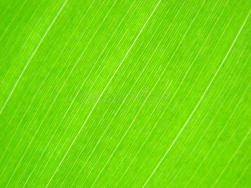 den gröna leafen lines makro arkivfoto