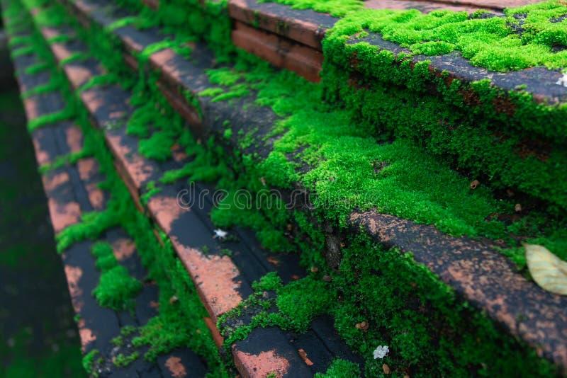 Den gröna mossan, grön lav arkivfoton