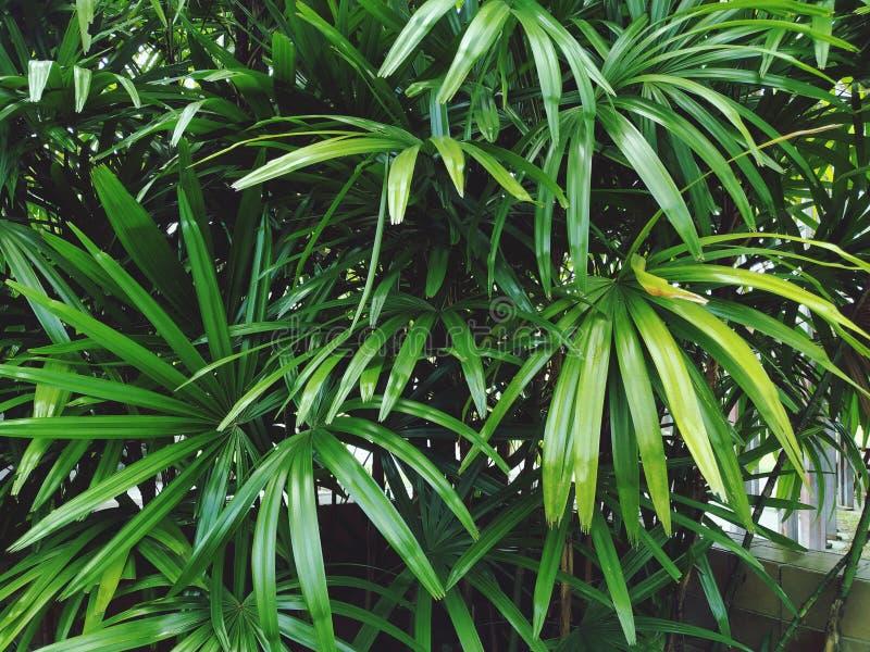 Den gröna palmbladet är härlig arkivbild