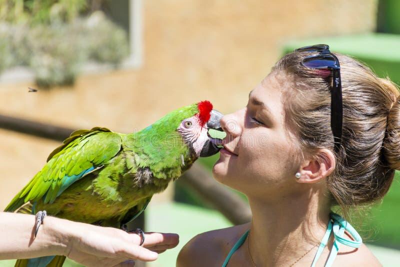 Den gröna papegojan som kysser en flicka - älska djur royaltyfria foton