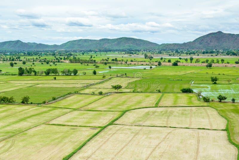 Den gröna risfältet i sommar på Kanchanaburi, Thailand royaltyfria bilder