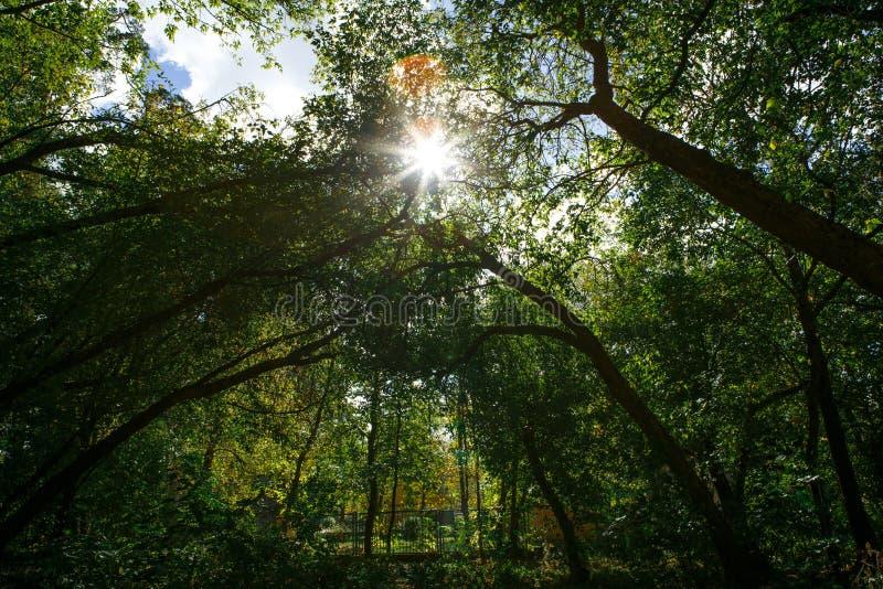 Den gröna skogen med rotar och drivved arkivbild