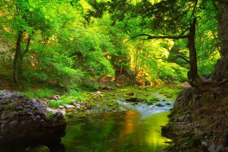 Den gröna skogen och vatten strömmar med mossiga stenar royaltyfri fotografi