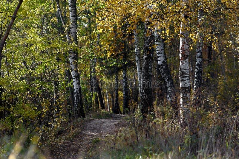 Den gröna skogen/parkerar slingan solig dag säsong Blandad skog arkivfoto