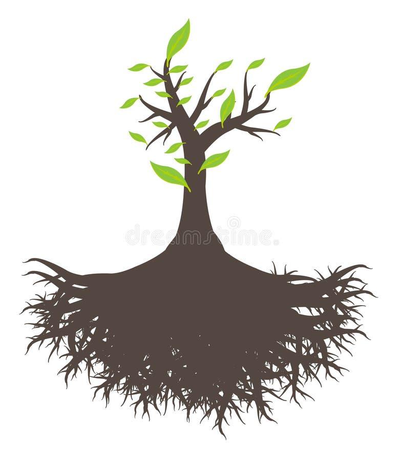 Den gröna treen rotar stock illustrationer