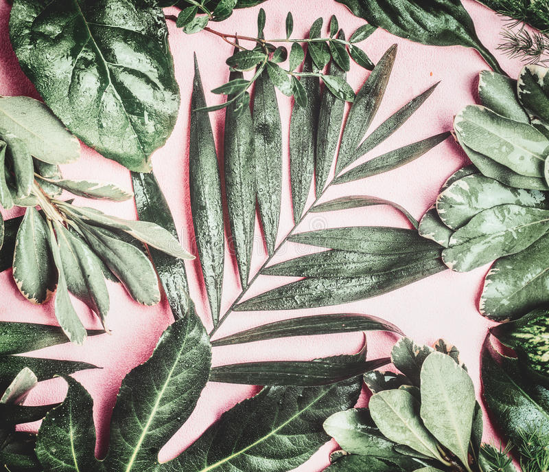 Den gröna tropiska naturen med olika djungelsidor med vatten tappar på rosa blek bakgrund royaltyfri bild