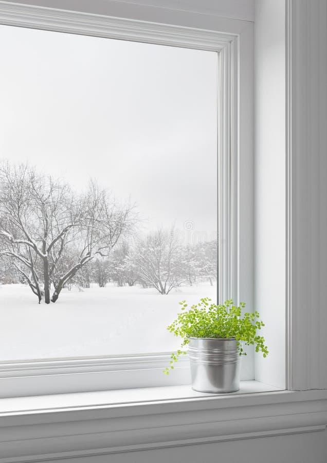 Den gröna växten och vintern landskap sett igenom fönstret arkivbild
