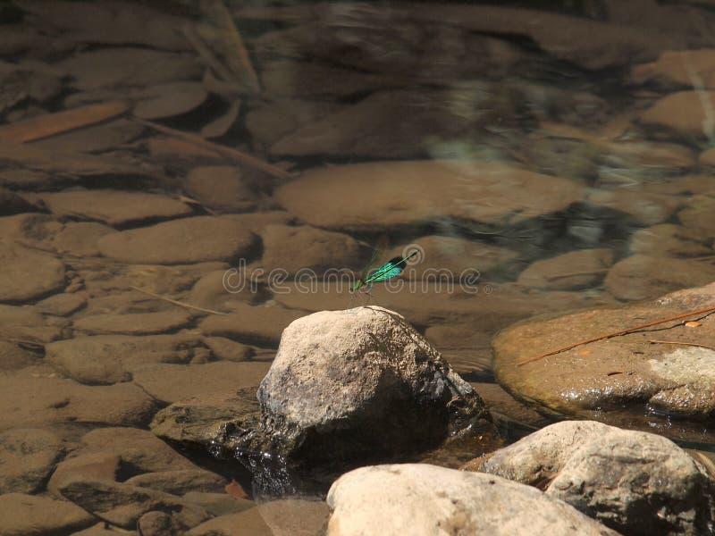 Den gröna sländan på vaggar på vattenfallet arkivbild