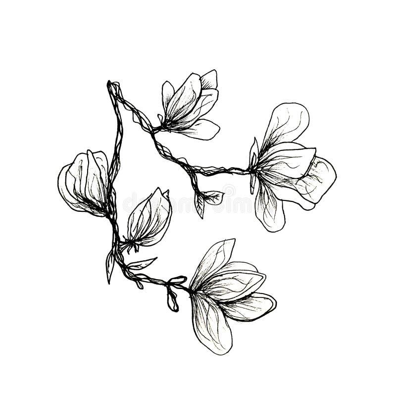 Den grafiska filialen av magnolian dras av handen med en svart penna Magnolia p? en isolerad vit bakgrund stock illustrationer