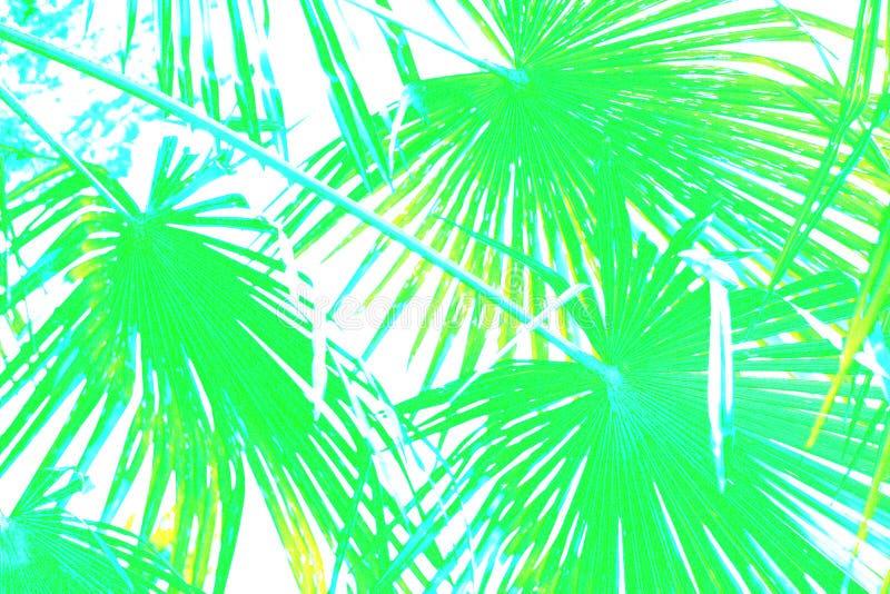 Den grafiska illustrationen av gröna palmblad förgrena sig i blått på vit backgrund stock illustrationer