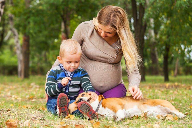 Den gravida modern med den lilla sonen som spelar med husdjuret parkerar in royaltyfri foto