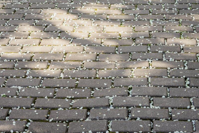 Den grova trottoartegelplattan, stillar dolt med stupade kronblad av körsbärsröda blomningar som täckas av kronblad av det sakura royaltyfria bilder
