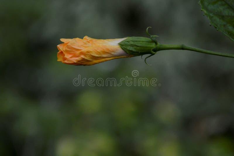 Den gula blomman betonade royaltyfri fotografi