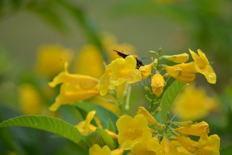Den gula blomman och krypet arkivbild