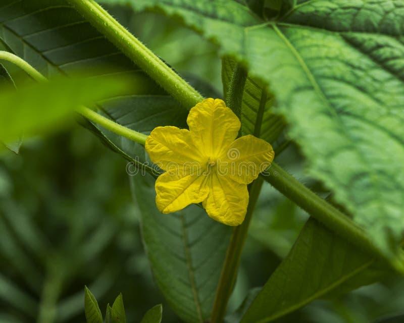 Den gula blomman p? gr?splan l?mnar bakgrund royaltyfri fotografi