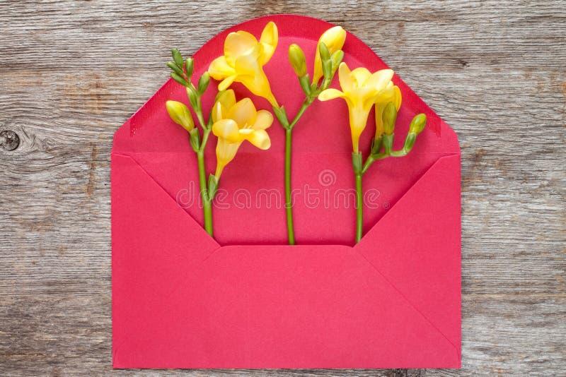 Den gula feesiaen blommar i rött kuvert arkivfoton
