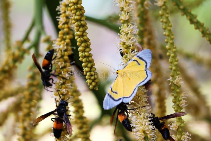 Den gula fjärilen, getingen och bin flyger svärmen runt om röstningen royaltyfri bild