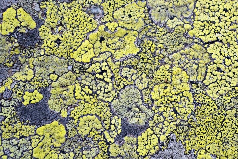 Den gula laven betyder ingen luftförorening arkivbild