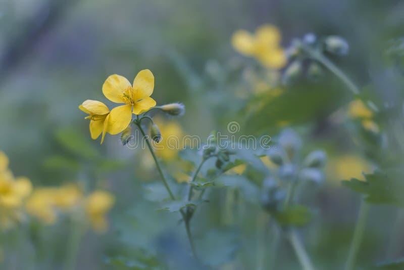 Den gula våren parkerar blommor royaltyfri foto
