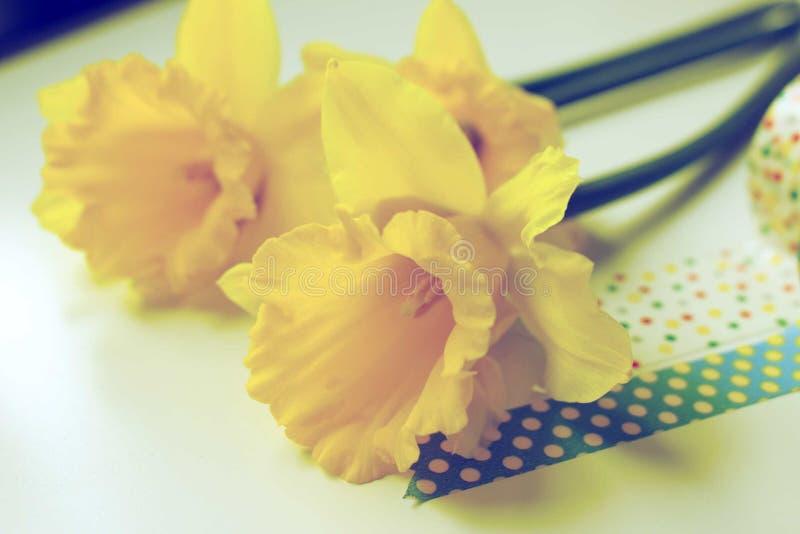 Den gula vårpingstliljan lämnar skrivbordet royaltyfri foto