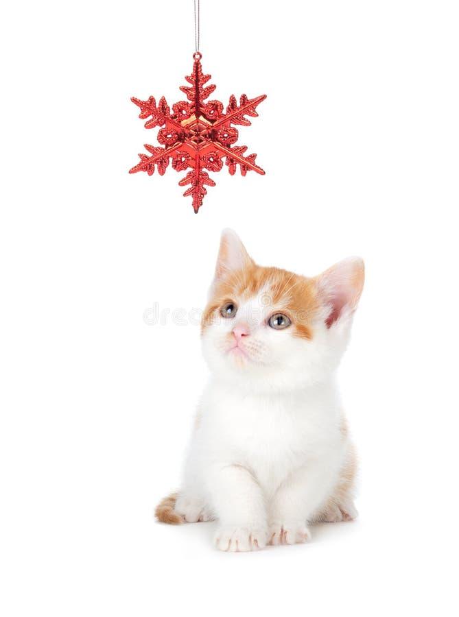 Den gulliga apelsinen och vit Kitten Playing med jul smyckar nolla arkivbilder