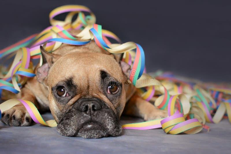 Den gulliga bruna hunden för den franska bulldoggen som ligger på jordning som täckas med färgrikt partipapper, blåser ut bandero royaltyfri foto