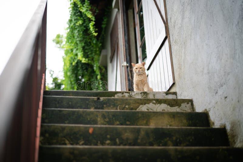 Den gulliga bruna katten satt på väntande mål för övretrappamoment från ägare arkivfoto