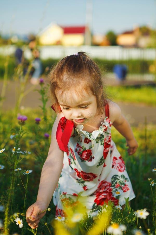 Den gulliga flickan i sommarklänning samlar vildblommor det härliga barnet går i natur royaltyfri fotografi