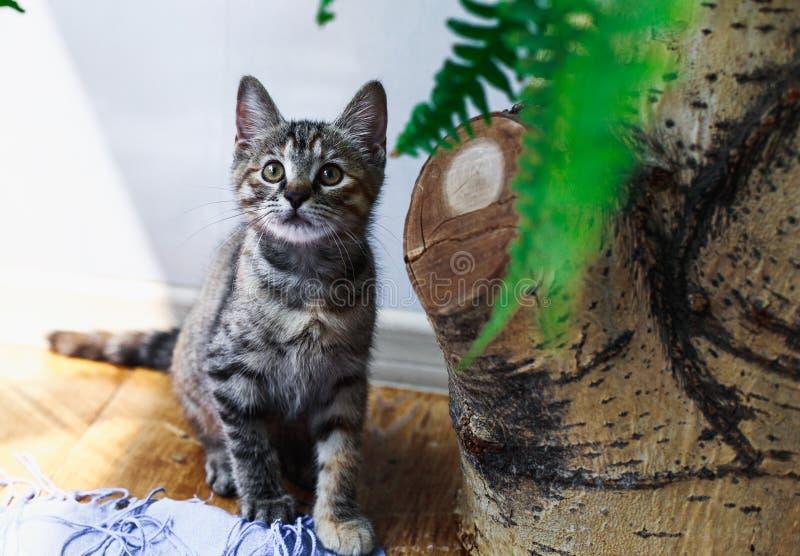 Den gulliga fluffiga strimmig kattkattungen sitter i busksnår av blommor fotografering för bildbyråer