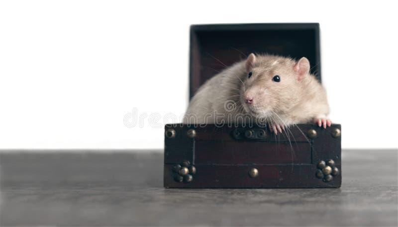 Den gulliga gnagaren sitter i en öppen resväska royaltyfri fotografi