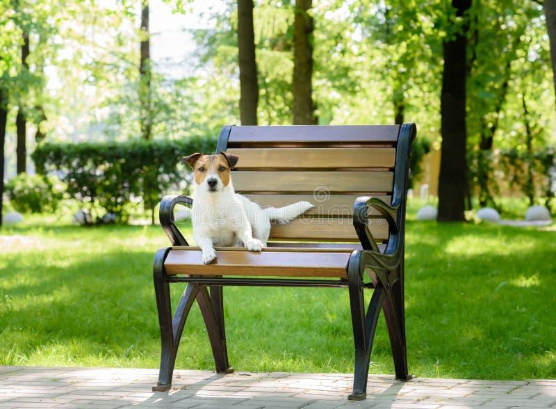 Den gulliga hunden som går på, parkerar att ligga på bänken som ser kameran royaltyfri foto
