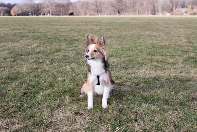 Den gulliga hunden väntar på kommandon arkivfoto