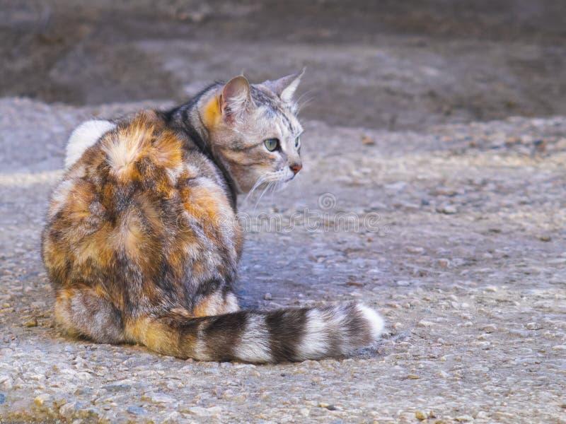 Den gulliga katten lägger ner på jordningen royaltyfri fotografi
