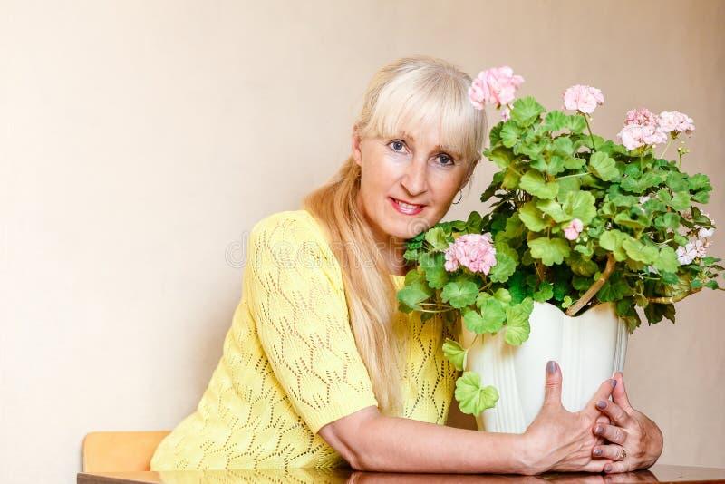 Den gulliga le kvinnliga pensionären omfamnar en stora Bush av att blomma pelargonian fotografering för bildbyråer