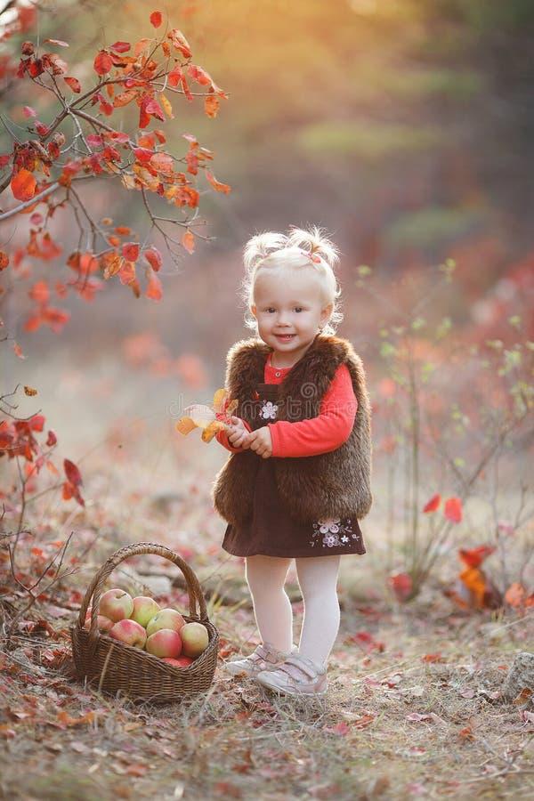 Den gulliga lilla flickan med en korg av röda äpplen i nedgången i parkerar royaltyfri foto