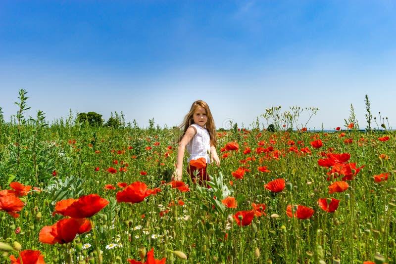 Den gulliga lilla flickan som spelar i röda vallmo, sätter in sommardagen, skönhet royaltyfria foton