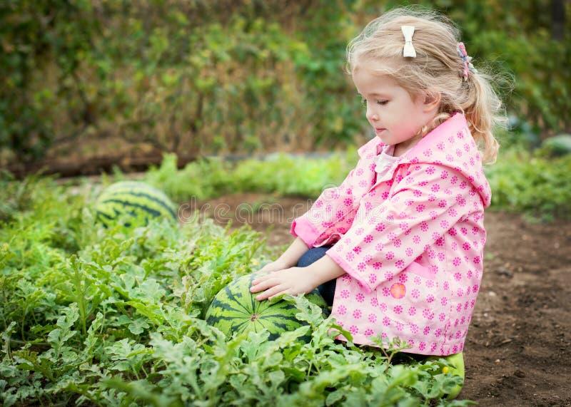 Den gulliga lilla flickan väljer en vattenmelon arkivfoto